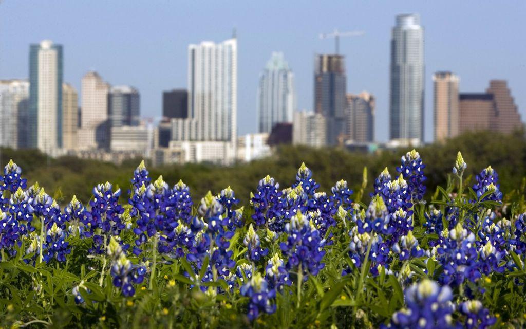 Austin bluebonnets